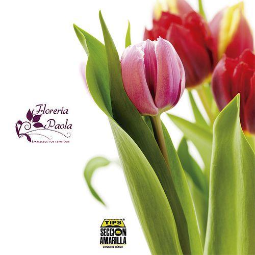 La flores son el detalle perfecto en un día como hoy, te recomendamos sin duda una de nuestras florerías anunciadas http://paginas.seccionamarilla.com.mx/floreria-paola/florerias/distrito-federal/ciudad-de-mexico/alvaro-obregon/san-angel/