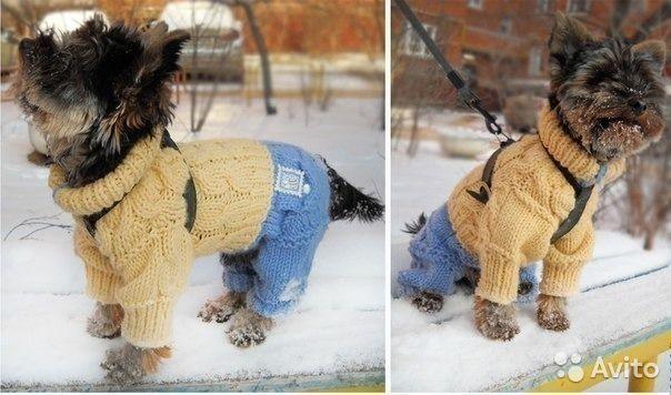 Собачки вязании