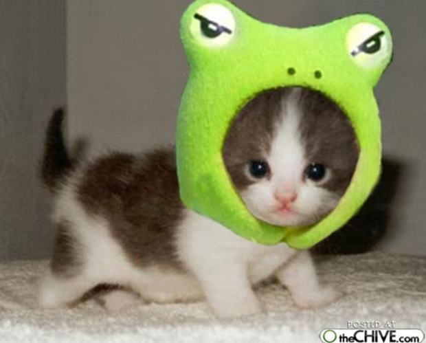 Funny Kittens And Puppies | Funny Cats & Dogs 11 | Bacon Wrapped Media