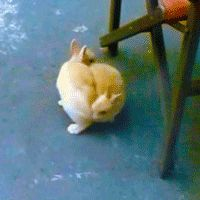 This bunny tornado. | The 33 Most Important Bunny GIFs On The Internet