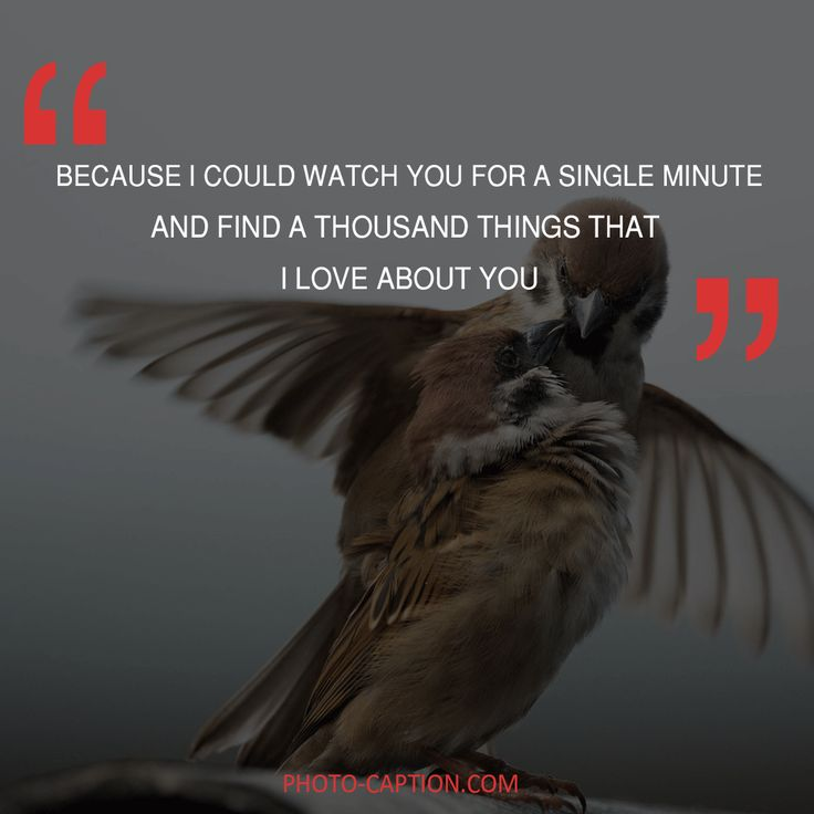 ''Because i could watch you for a single minute and find a thousand things that i love you about.'' Check out the link in the bio for more love captions #love #lovely  #inlove #me #obsessed #amazing #perfect #everygirlsstory#sparkle #BOYFRIEND #cute #beautiful #girlfriend #girl #couple #dating #marriage #date #instalove #instamood #loveyou #lovehim #loveher #quote #quotes #quotegram #quoteoftheday #caption #captions #photocaption #FF #instafollow #l4l #tagforlikes #followback