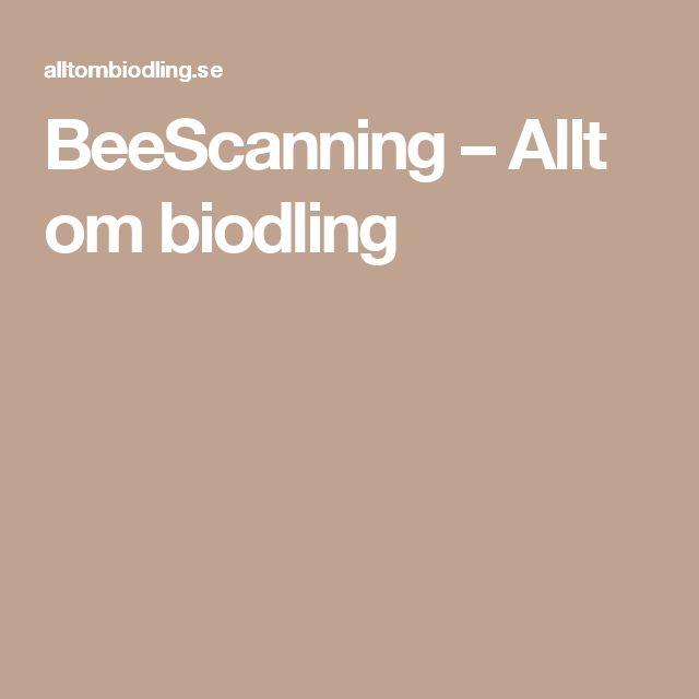 BeeScanning – Allt om biodling