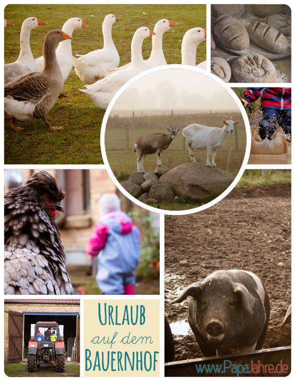 Mit den Kindern Urlaub auf einem Bauernhof machen? Na klar! Und dann Hühner, Ziegen und Schweine füttern, mit dem Traktor fahren, reiten und und und...