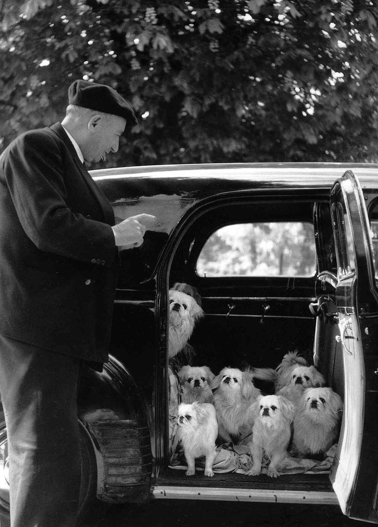Photo: Robert Doisneau. This is so sweetly eccentric. The pups look as if they're getting instructions. I love the beret too. You know this has to be France.
