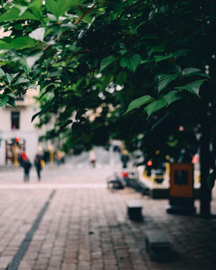 Street leaves.