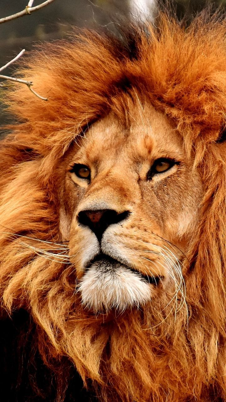 Pin On Aesthetic Animal Wallpapers Background Images 4k