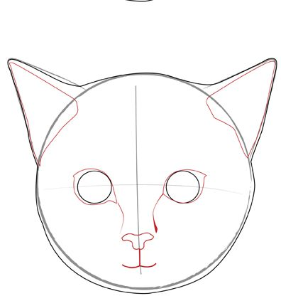 How to Draw a Realistic Cat's Face: 11 Steps