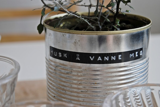 Charming - use dymo label maker to identify seedlings grown in cans.