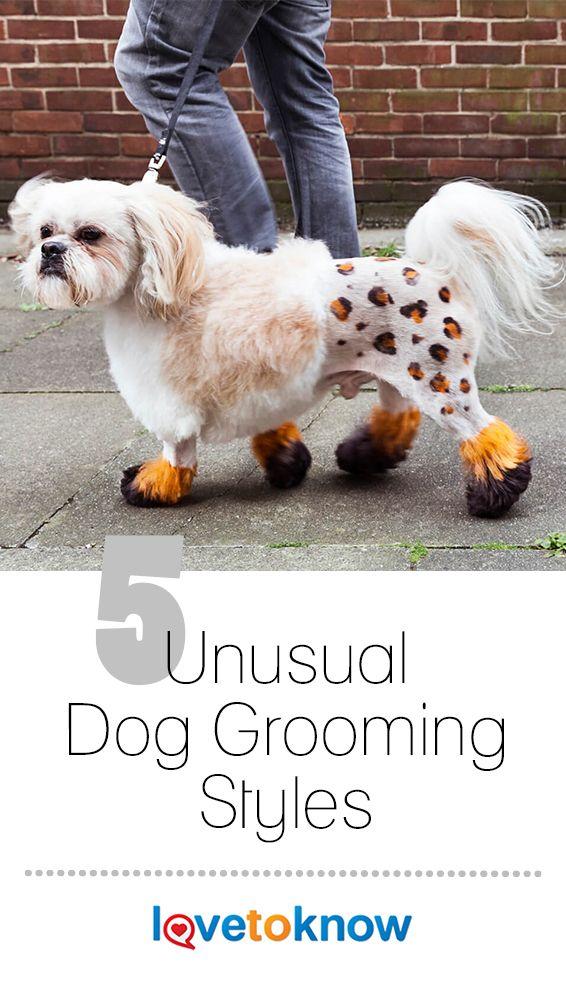 Five Unusual Dog Grooming Styles Dog Grooming Styles Dog Grooming Dog Training Treats