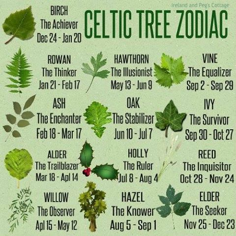 fc4999a8e24f The Celtic Zodiac is based on the cycles of the moon. The year is divided  into 13 lunar months with a tree assigned to each month. The…