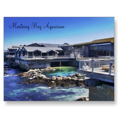 Monterey Bay Aquarium Nice But Doesn 39 T Hold A Candle To