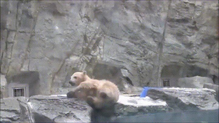 Just look how concerned that bear looks. - GIF on Imgur