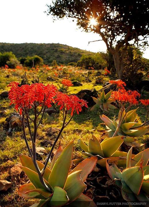 Graaff Reinet, Karoo, Eastern Cape