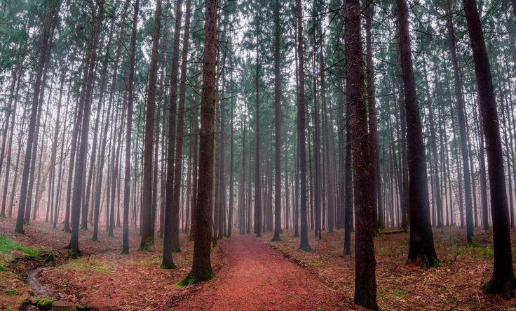 Foggy day at The Morton Arboretum. Lisle IL. [OC][6384  3848]