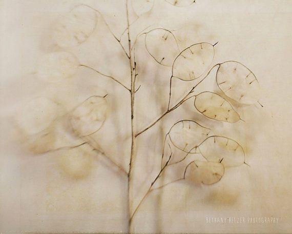 Nature Photography, Still Life Photography, Botanical Print, 8×10 Print, Lunaria, Nature Still Life, – Products