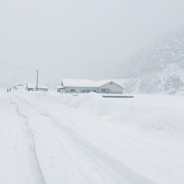 昨日に引き続き今日も鳥取は一面に雪景色が広がっています雪だいぶ積もってます #landscape #snow #movie #雪 #景色 #冬 #winter #local #nature #naturelovers  #minimal #鳥取