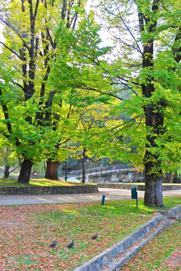 Bright Victoria : Natural beauty : Alpine Valley Getaways