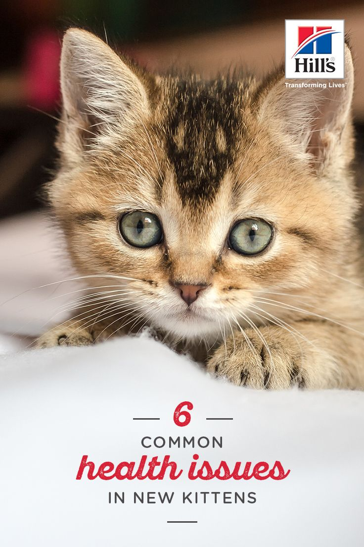 Congratulations on bringing home a new kitten! Still, you may be a bit nervous. After all, there are some illnesses that are common to new kittens. Below are six common health issues to look out for. Just remember that your kitten is less likely to contract a health issue if you feed her a healthy kitten food. Good kitten food will help her immune system develop in early days.