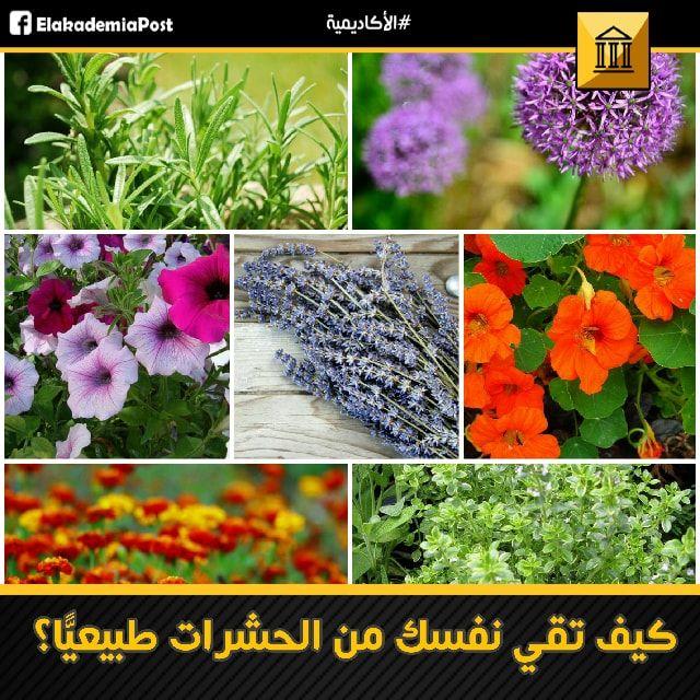 هناك العديد من الأعشاب والأزهار التي من شأنها أن تبعد الحشرات الغير مرغوبة عن منزلك و جلدك الرقيق فهذه النباتات تحوي على زيوت تعمل كطارد طبيعي للحشرات ست Plants