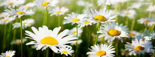 White Pretty Flowers Facebook Cover