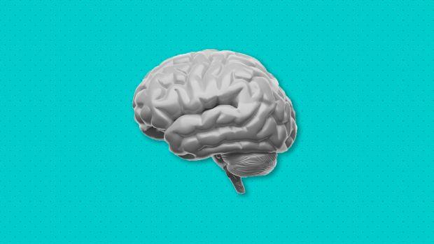 Neurovetenskap för lärandet http://edut.to/1KufPJh.