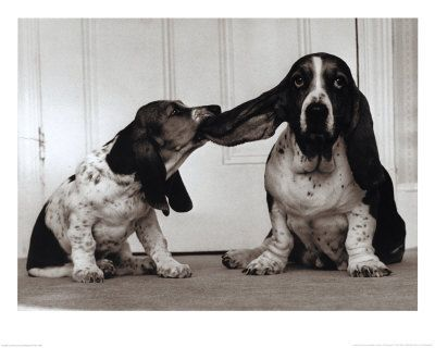 dog ear cleaning solution homemade - Lend Me Your Ear