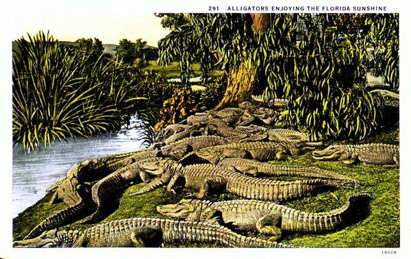 Florida Memory : Digital Collections