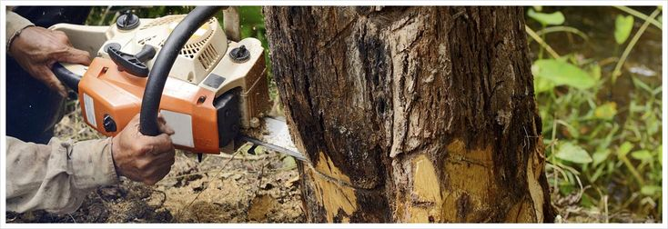 If you are Looking for the Stump Removal Services in Adelaide then All tree & Stump Removal is best option for you. Call Our experts today on 0439 686 959, and we'll get a team out to remove your stump in a fast and professional manner.