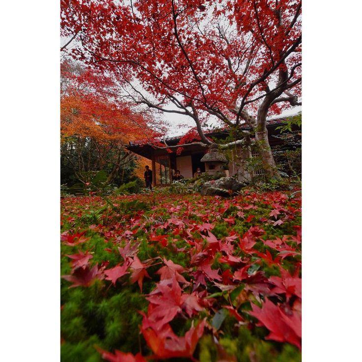 昨日から急に進んだみたいです。 道の途中に小さな曲がり角、細い道を進むと紅葉の名所が。 厭離庵。 なんて読むかわからなかったんですが… 小さな空間ですが最高な空間でした。 #lovers_nippon #instagood #instagram #japan_photo_now #team_jp_ #team_jp_西 #igersjp #japan_of_insta #nikonphotography #phos_japan #icu_japan #wu_jp #loves_united_japan #bestphoto_japan #japan_art_photography #japan_daytime_view #kyoto_style #japan #kyoto #kyotojapan #kyotographie #loves_united_kyoto #art_of_japan_ #wu_japan #loves_united_asia #ひろがり同盟 #紅葉2017 #嵯峨嵐山 #厭離庵 #嵐山