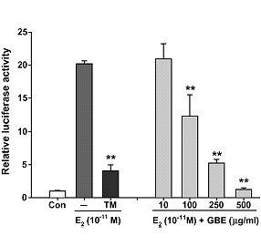 Ginkgo is een drievoudig anti-oestrogeen