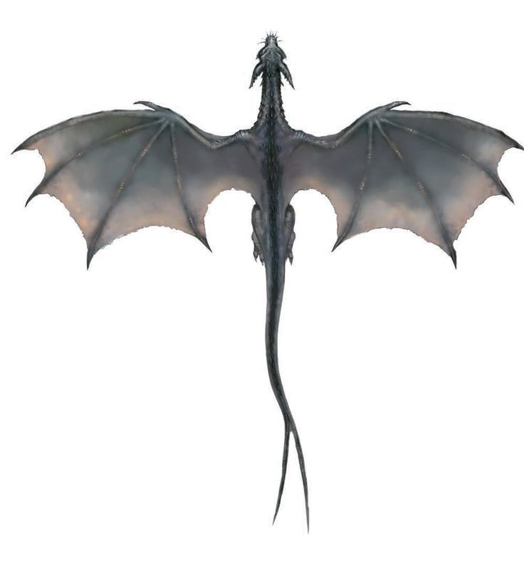 Image detail for -Gray Dragon (overhead).png – #de…