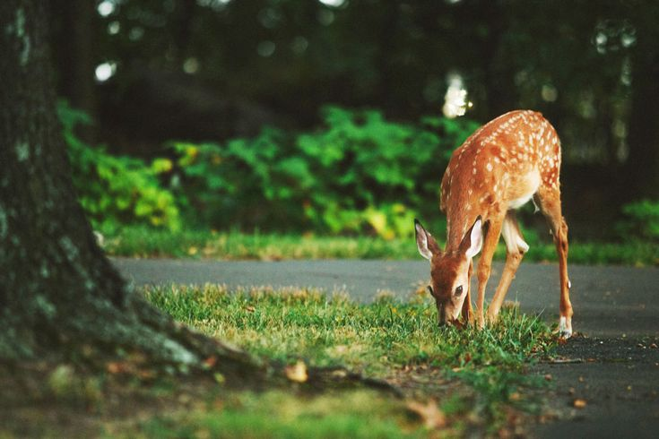 Oh Deer: Wildlife Deterring Plants