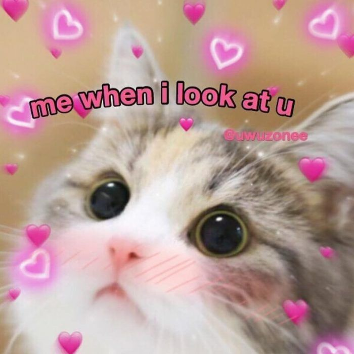 30 Wholesome Memes For Anyone Having A Bad Day Or In Need Of Love Cute Love Memes Cute Cat Memes Cute Memes