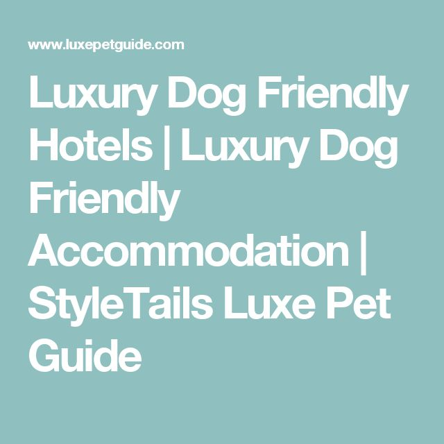 Luxury Dog Friendly Hotels | Luxury Dog Friendly Accommodation | StyleTails Luxe Pet Guide