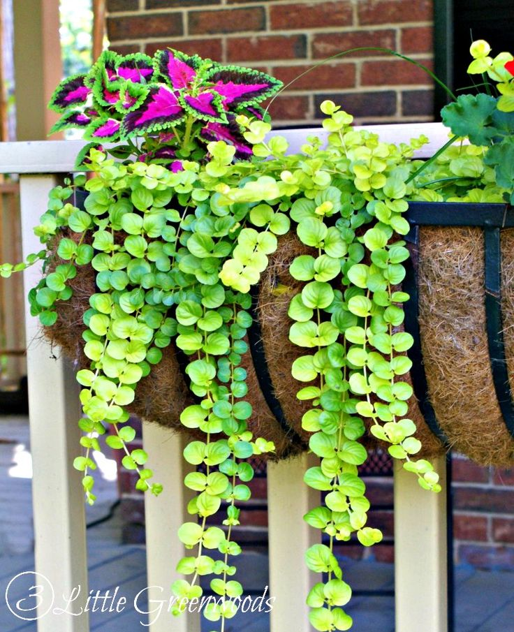 Popular Hanging Plants: 17 Best Ideas About Hanging Baskets On Pinterest