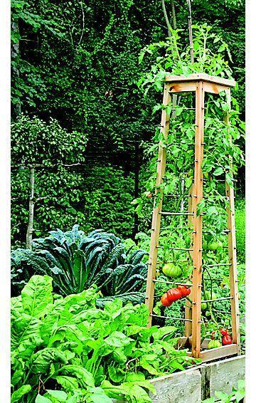17 Best Images About Kitchen Garden On Pinterest Gardens 640 x 480
