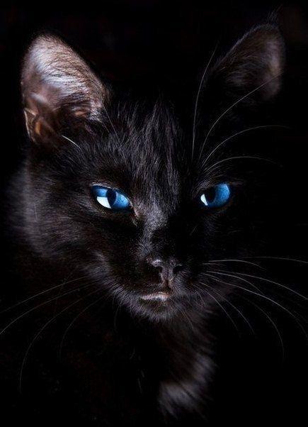 """Blue-eyed embedded in this blackness of beauty.""~~Lady Zenobia ladyzenobia-the-writer.tumblr.com"