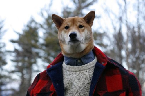 womaninthewoods:  sphinks:  mensweardog:  Menswear Dog Goes Into The Wild Featured Items:Buffalo Plaid Jacket: WoolrichFisherman's Sweater: Original PenguinChambray Shirt: Land's EndHudson Bay Axe: Best Made CompanyBrown Button Down & Henley: Club Monaco  omfg   ITS DOGE