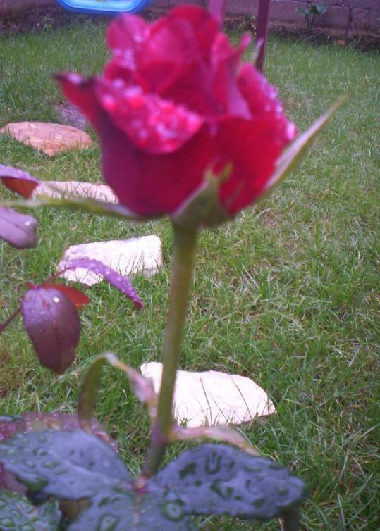 My flowers :) My love!:)