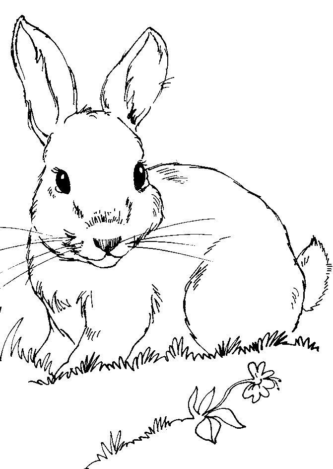 Pin Bunny Windowcolor Templates Pelautscom Auf Pinterest Bunny Pelautscom Pin Malvorlage Hase Ostern Zeichnung Osterhase Malen