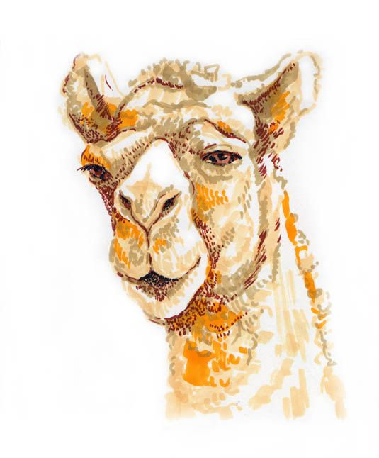 https://www.etsy.com/ru/listing/171653460/drawing-camel-camello-animal-beige?ref=tre-2723150541-15