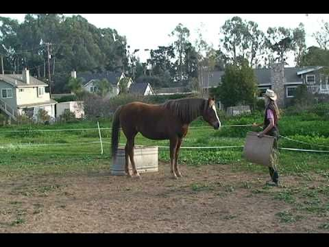 Training a horse to stand in one place - clicker training horses