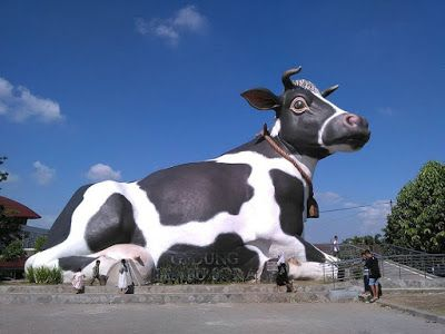 Boyolali, kata yang memang tidak asing ditelinga kita. Kota yang terkenal akan susu sapinya...