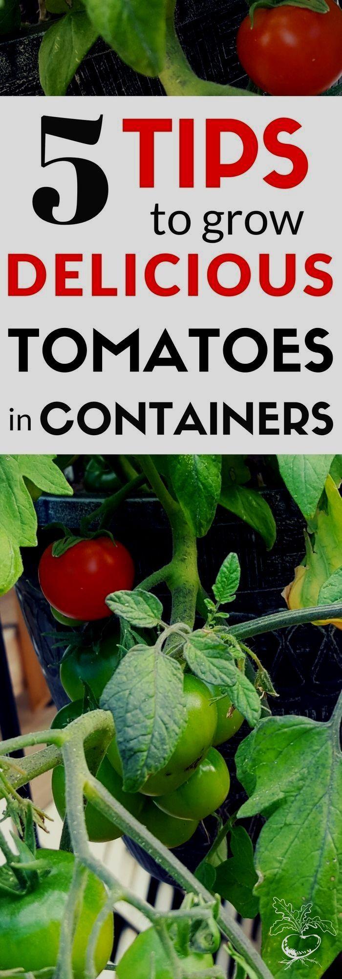 gardening ideas for beginners #organicvegetablegardening