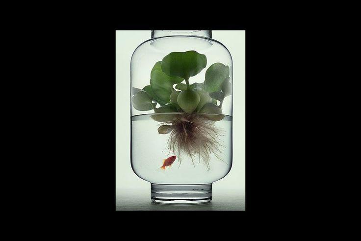 1000 id es sur le th me plantes aquatiques sur pinterest tangs jardins d 39 eau et jardinage. Black Bedroom Furniture Sets. Home Design Ideas
