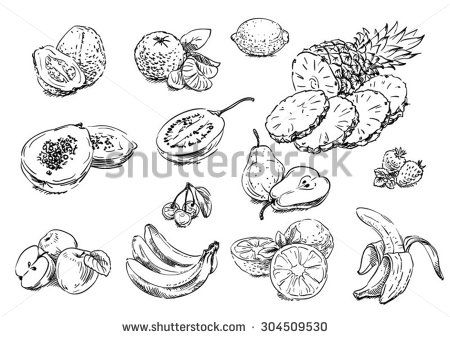 Sketches of food: fruits - stock vector