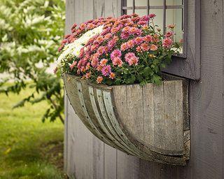 Wine barrel planter (Explored, thank you!)   Flickr - Photo Sharing!