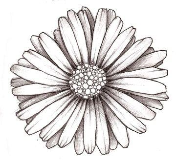 Best 25 Aster Tattoo Ideas On Pinterest Aster Flower