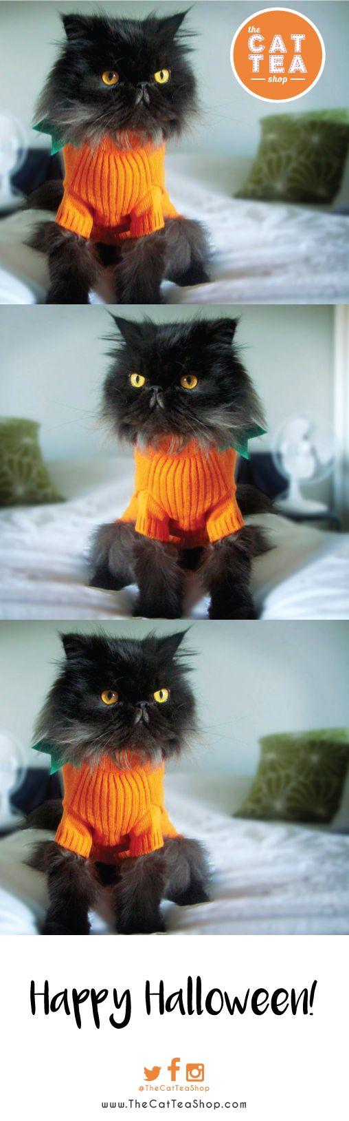 Pumpkin Kitty !  #Halloween #jackskeleton #pumpkin #pumpkincookies #pumpkins #pumpkin #cat #cats #catnip #organic #toronto #canada #ontario #thecatteashop #ghostcookies #candycorn #trickortreat