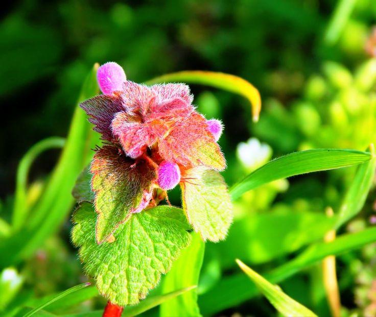 Flower by Lorena Georgiana Craia